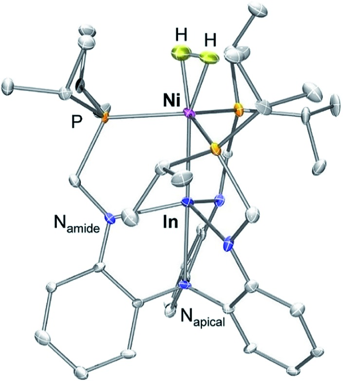 Thermodynamic and kinetic studies of H2 and N2 binding to bimetallic nickel-group 13 complexes and neutron structure of a Ni(η2-H2) adduct.